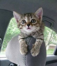 Super Cute Kitten - Click to see loads of great pictures of cats and kittens to brighten your day.