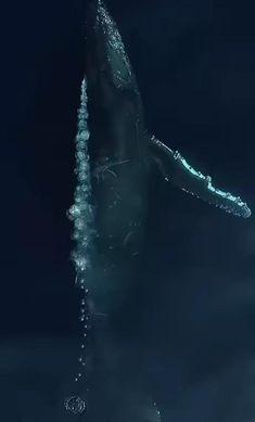 Beautiful Sea Creatures, Deep Sea Creatures, Amazing Animals, Animals Beautiful, Animals And Pets, Funny Animals, Cute Animals, Underwater Photography, Wildlife Photography