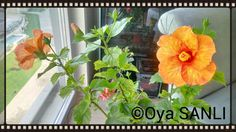 Every day is flower #everydayisflower