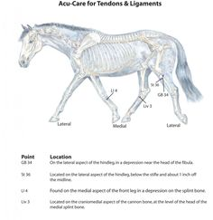 Caring for Tendons & Ligaments with Animal Acupressure
