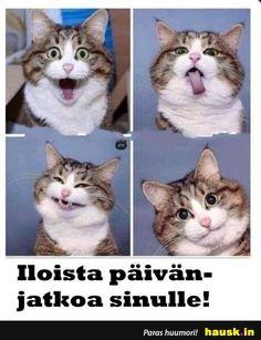 Animal Humour, Funny Cats, Haha, Memes, Animales, Ha Ha, Meme, Funny Kitties, Cute Cats