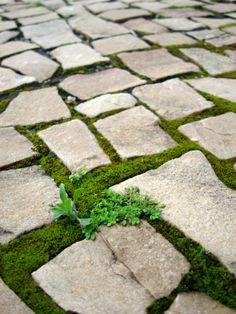 Moss on stone pavement