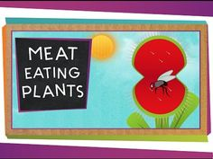 SciShow Kids: Meat Eating Plants by scishow: Many animals eat plants, but did you know some plants eat animals? Jessi and Squeaks explore some of their favorite meat eating plants! Support at: https://www.patreon.com/scishow