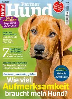 Belohnen, streicheln, spielen Wie viel #Aufmerksamkeit braucht mein #Hund?  Jetzt in @PartnerHund:  #Hundeerziehung