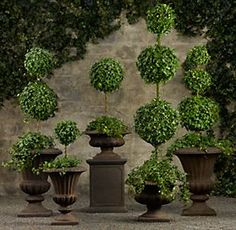 Topiaries | Restoration Hardware Inside or Out Garden or Interior Design...Ivy topiaries are classic pieces of decor...every home I have has had topiaries..calling Chrissy..my topiary creating pal! My grandmother made us these for our first homes at a fraction of the cost! <3 RIP my creative Nanny! <3