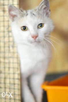 Adopt a cat  ! 0749 702 551