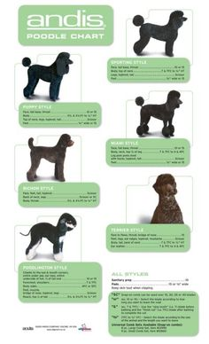 Andis Poodle Chart http://www.allgroom.co.nz/blade-
