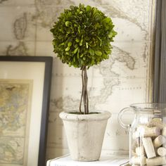 Preserved Boxwood Topiary, Single Ball | Formal and refined, this rounded preserved boxwood is perfectly complemented by a distressed, parchment-toned clay pot.