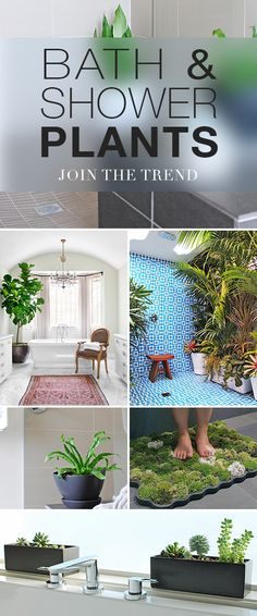 Bath & Shower Plants • How to Join The Trend! • Click thru to this blog post and get tips and ideas on how to create a wonderful spa oasis feel in your bath or shower! #showerplants #bathplants #showerwithplants #plantsintheshower #indoorplants