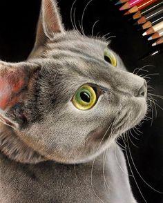 Japanese Artist Creates Hyperrealistic Portraits Of Cats Pics) — Bored Panda Comic Drawing, Drawing Sketches, Realistic Cat Drawing, Hyperrealistic Drawing, Pen Illustration, Cat Illustrations, Colored Pencil Portrait, Cat Nose, Son Chat