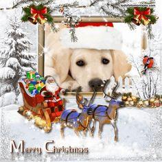 mejores marcos de navidad con santa claus san nicolas papa noel Christmas Frames, Christmas Pictures, Fotografia Online, Dogs, Animals, Saint Nicholas, Papa Noel, Xmas Pics, Animales