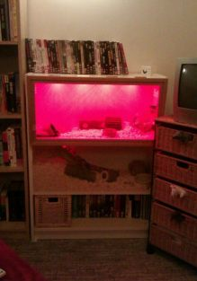 Two-Story Hedgehog Cage made from a bookcase- wow. Arturo could have lived like a king. ~w