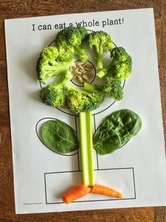 It's plant time!! Teach kids about the parts of a plant while they eat parts of a plant for a healthy snack.