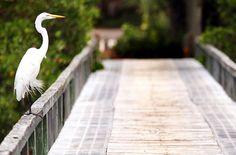 10 Secret Seaside Escapes - Don Pedro Island, Florida - SmarterTravel.com