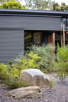 Photograph portfolio of native gardens and landscapes designed and built by Australian Landscape designer Sam Cox. Australian Native Garden, Australian Beach, Australian Plants, Landscape Design, Garden Design, Bush Garden, Native Design, Beach Gardens, Shed Homes