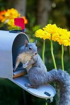Funny Animals – A Funny Animal Videos Compilation 2015 Part 2 Cute Squirrel, Baby Squirrel, Squirrels, Cute Baby Animals, Animals And Pets, Funny Animals, Squirrel Pictures, Animal Pictures, Kitty Cats
