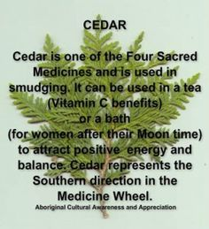 Cedar is One of the Four Sacred Medicines and is Used in Smudging. It Can be Used in a Tea (Vitamin C benefits) .or a Bath (for Women at Moon Time) to Attract Positive Energy and Balance. Cedar Represents the Southern Direction in the Medicine Wheel. Healing Herbs, Medicinal Plants, Natural Healing, Natural Cures, Crystal Healing, Moon Time, Witch Herbs, Herbal Magic, By Any Means Necessary