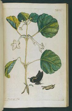Afbeeldingen van zeldzaame gewassen - Biodiversity Heritage Library