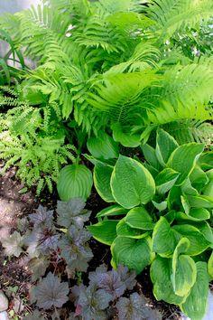 A study in texture and contrast: Heuchera, Maidenhair Fern, Victoria Fern, Hosta, Bleeding Heart,  (My Garden, Spring 2011, Zone 5b)