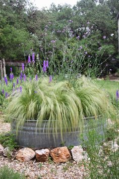 Verbena bonariensis, container gardening, landscape design, Rock-Oak-Deer: As seen on Pinterest: The Stock Tank Garden 2015
