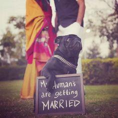 20 Easy Ways To Make Your Indian Wedding Goddamn Adorable Sikh Wedding, Dog Wedding, Punjabi Wedding, Wedding Pics, Wedding Shoot, Wedding Couples, Wedding Ideas, Wedding Bells, Wedding Reception