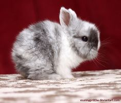 """picolaine: """"🐰🐰Rabbit III by Photo-Grafixx Some rights reserved. This work is licensed under a Creative Commons Attribution-Noncommercial-No Derivative Works License. Finding Neverland, Baby Animals, Exotic, Bunny, Creatures, Deviantart, Pets, Rabbits, Photographs"""