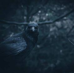 Macabre, Creepy, Bird, Animals, Animales, Animaux, Birds, Animal, Animais