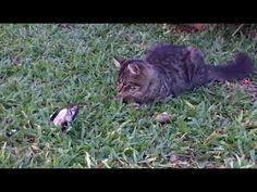 Video de Gato Gracioso Cachorro Jugando con Aves Pajaros | de Gatitos Lindos y Tiernos - http://otrascosasvirales.com/video-de-gato-gracioso-cachorro-jugando-con-aves-pajaros-de-gatitos-lindos-y-tiernos/