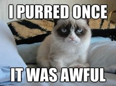 I purred once. It was awful.