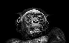 Gallery - COOPH - Cooperative of Photography