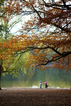 Autumn colors over Grunewald lake.  Berlin, Germany.    Photo by Vi Rowshankish via My Small Hours,  http://smallhoursofpurple.tumblr.com/post/34243817016/autumn-in-berlin