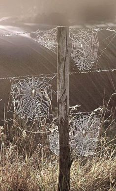 spider webs in the morning dew