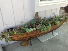 Succulent canoe by Simply Succulent https://www.facebook.com/pages/Simply-Succulent/222665291108990