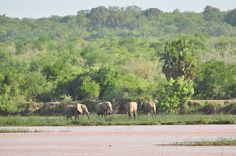 Wildlife, Elephant, In This Moment, Game, Animals, Animales, Venison, Animaux, Games