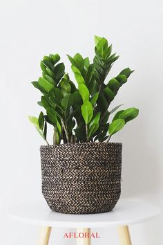 House Plants Live ZZ Plants are a great way to add natural tropical greenery to., : House Plants Live ZZ Plants are a great way to add natural tropical greenery to…, Cactus House Plants, House Plants Decor, Plant Decor, Cactus Cactus, Succulents Garden, Fake Plants, Artificial Plants, Fleurs Diy, Decoration Plante