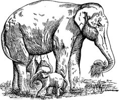 Elephant Safari Coloring Pages | Wildlife Coloring Page African Safari Elephant Pictures