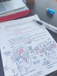 "joo-ah-lee: days of productivity I think of Cristina Yang every time I study the heart "" Medical Students, Medical School, Nursing Students, Medicine Student, Study Pictures, School Study Tips, School Tips, Student Motivation, Study Hard"