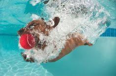 Dog fetching underwater by Rainer Von Brandis/iStock.