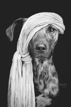 Pirate of the Baltic Sea by Elke Vogelsang Hotshoe.org