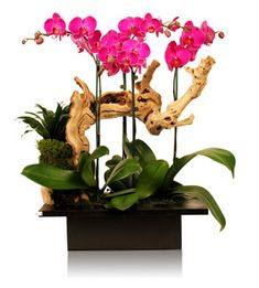 TK Orchids - Company Information