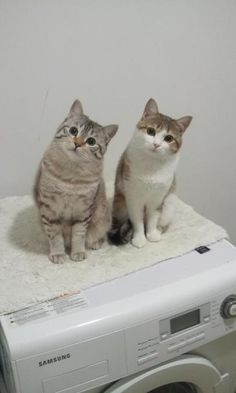 What a charming way to do the laundry, with these two sweeties watching. #cats
