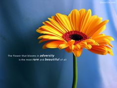 ... Download Wallpapers Bible Verse Nature Fruits And Flowers Daily Verses