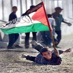 Blogs_30_palestine_350_350