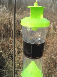 wasp-trap with cola and 1/2 tsp dish soap