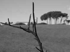 burned branch