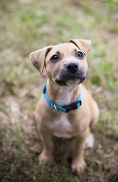 adoptable puppy, Humane Society Union County, NC, photo by Dani Nicole Photography