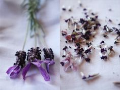 Lavender stalks and flowers from the garden.