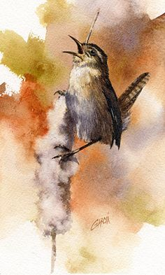 House Wren by Joe Garcia Watercolor