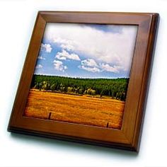 A golden meadow in Wyoming with green trees on a blue sky Framed Tile