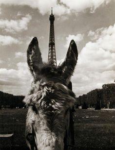 R Doisneau. 1969. Eiffel Tower & ponies
